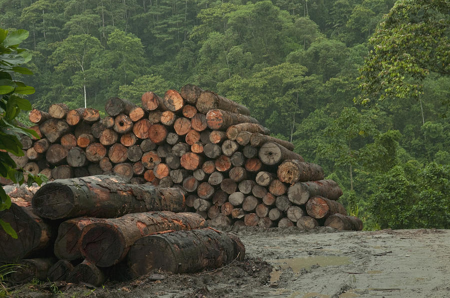 Logging Of Native Rainforest, Ecuador Photograph by Murray Cooper