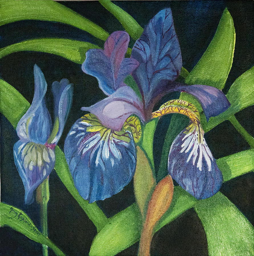 Iris Painting - Lois Iris by Amy Reisland-Speer