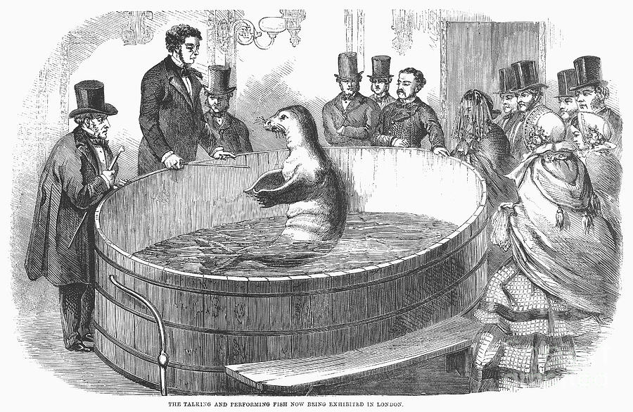 1859 Photograph - London: Talking Fish, 1859 by Granger