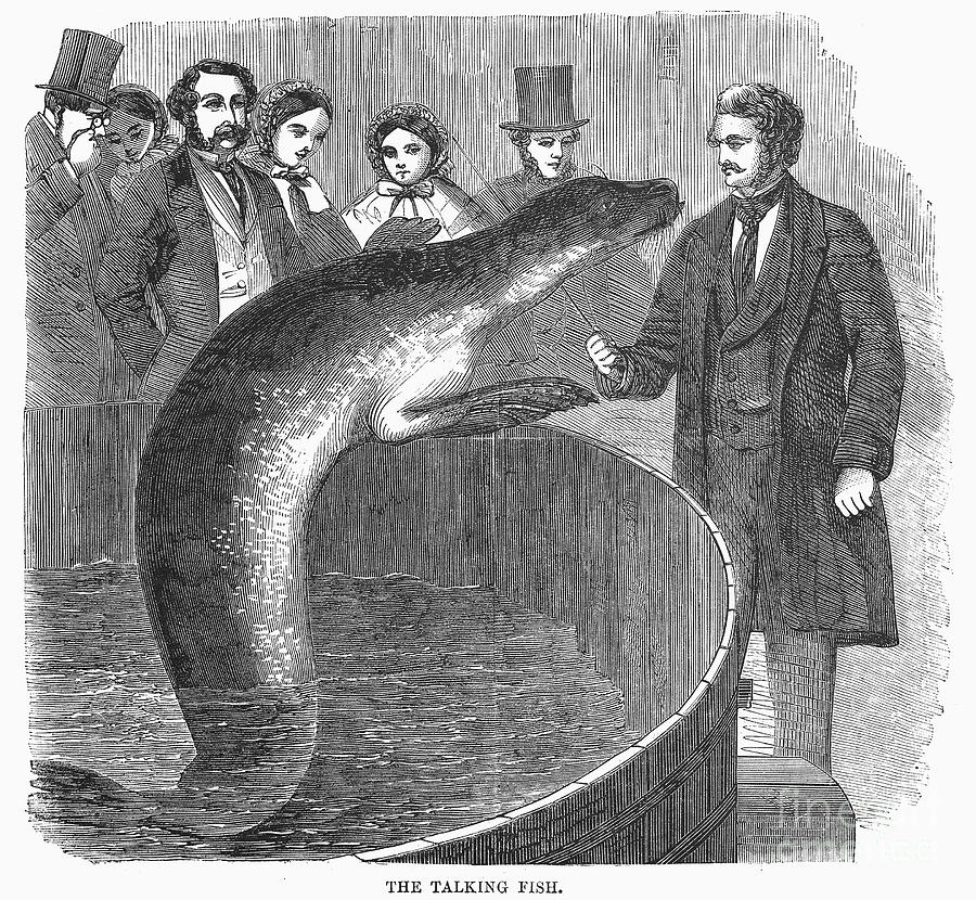 1859 Photograph - London: Talking Fish by Granger