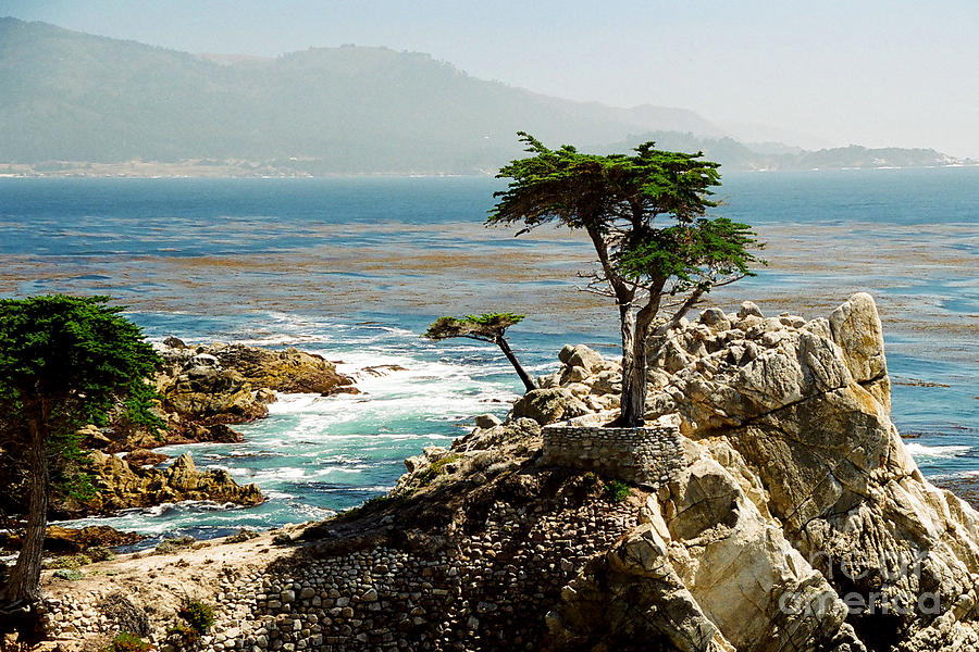Trees Photograph - Lone Cypress by Frank Townsley