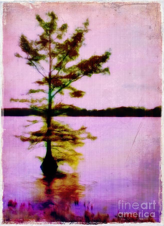Louisiana Photograph - Lone Cypress by Judi Bagwell