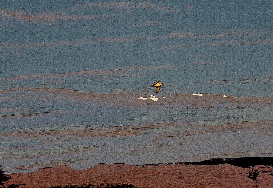 Sea Gull Digital Art - Lone Gull  by Gilbert Artiaga