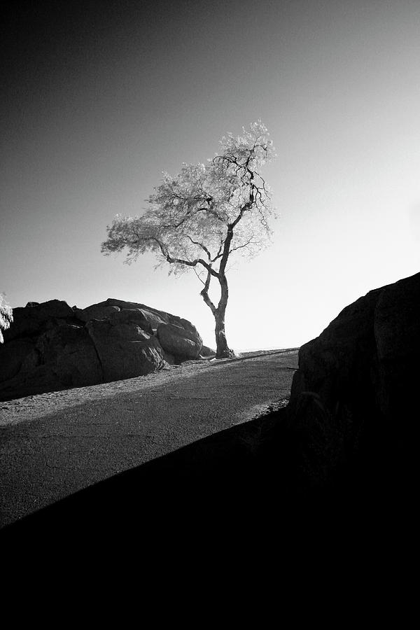 Infra Red Photograph - Lone Tree by G Wigler