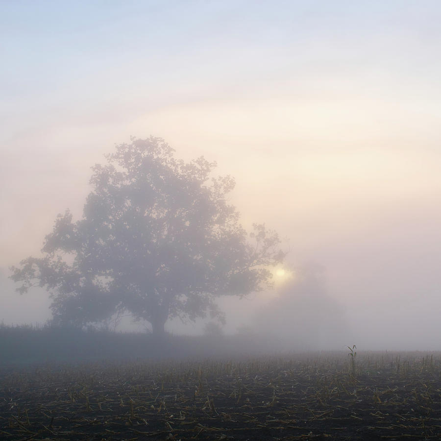 Square Photograph - Lone Tree by Paul Simon Wheeler Photography