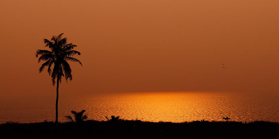 Ocean Photograph - Lone Tree Silhouette During Sunset by Hegde Photos