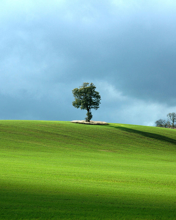 Lone Tree Photograph - Lone Tree Sintinel by Duncan Nelson