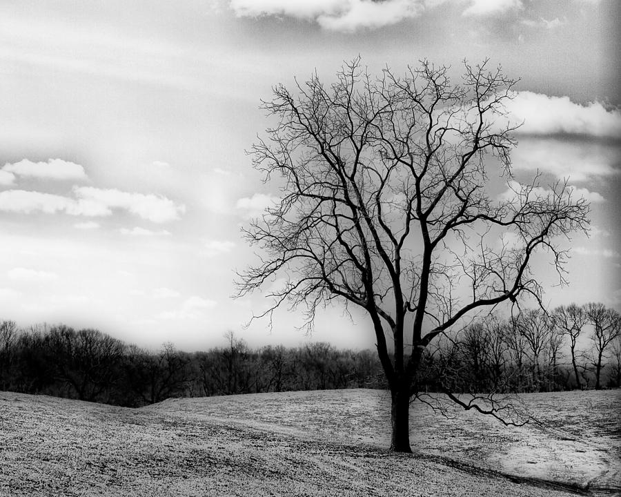 Loneliness Photograph - Loneliness by Trudy Wilkerson