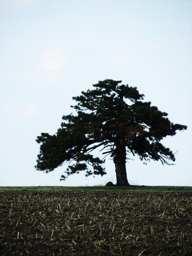 Single Tree Photograph - Lonely Tree #1 by Todd Sherlock