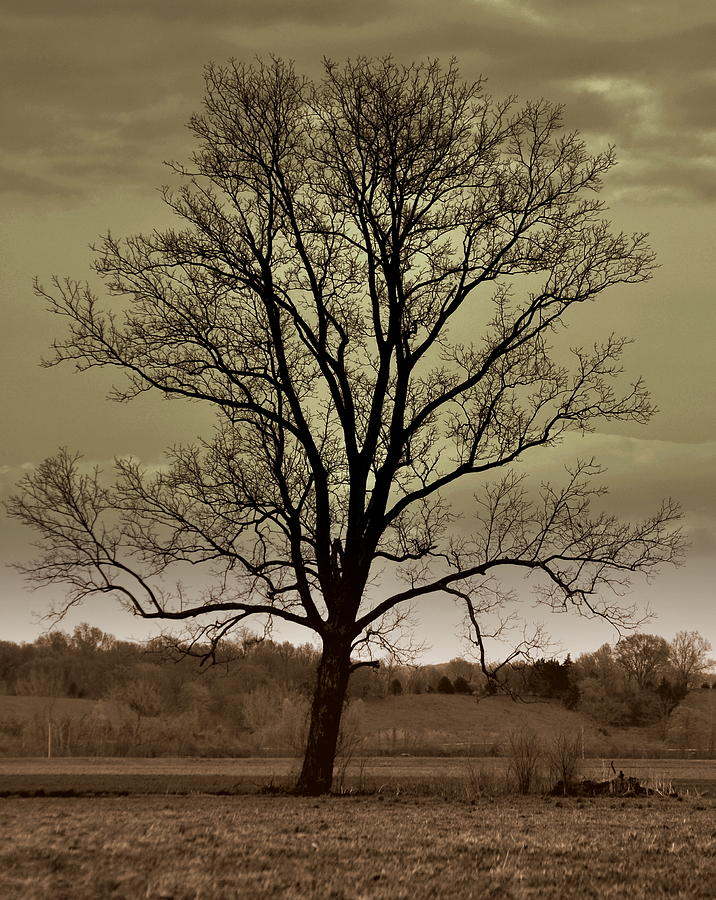 Tree Photograph - Lonely Tree by Marty Koch