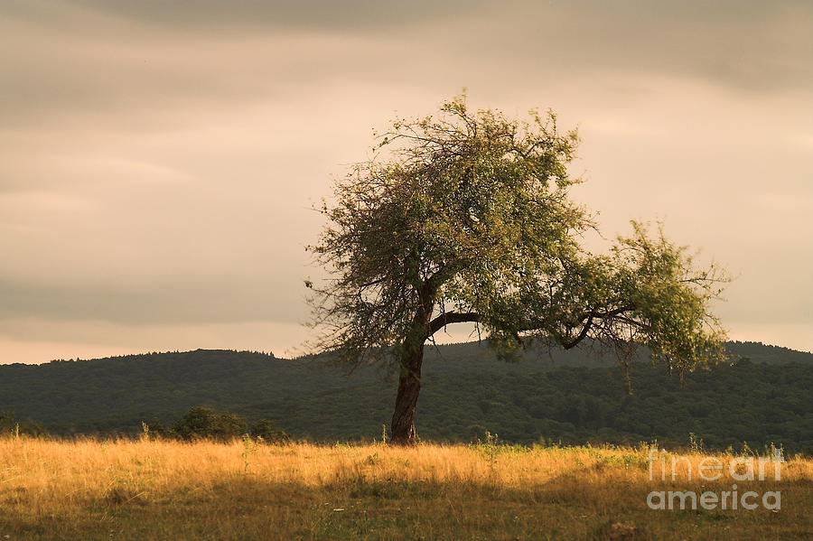 Nature Photograph - Lonely Tree by Odon Czintos