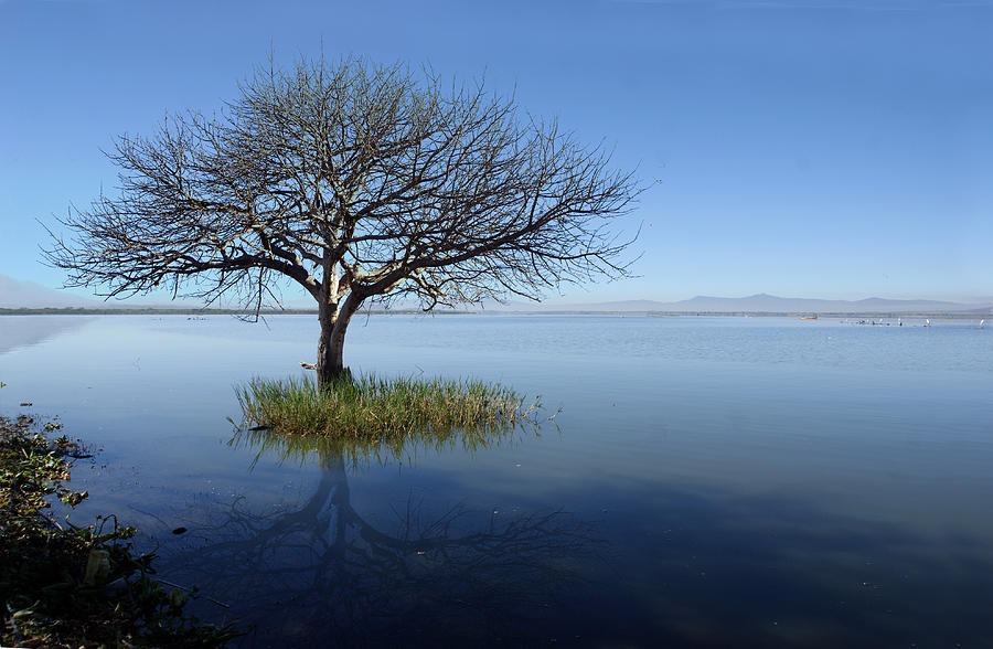 Horizontal Photograph - Lonely Tree by Saul Landell / Mex