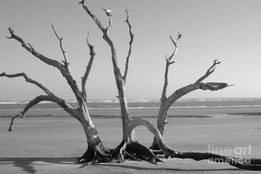 Lonesome Photograph - Lonesome Tree by Melody Jones
