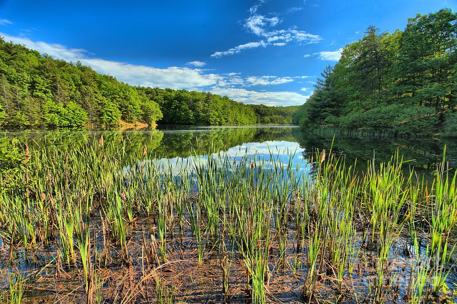 Long Branch Lake Photograph - Long Branch Lake Marsh by Adam Jewell