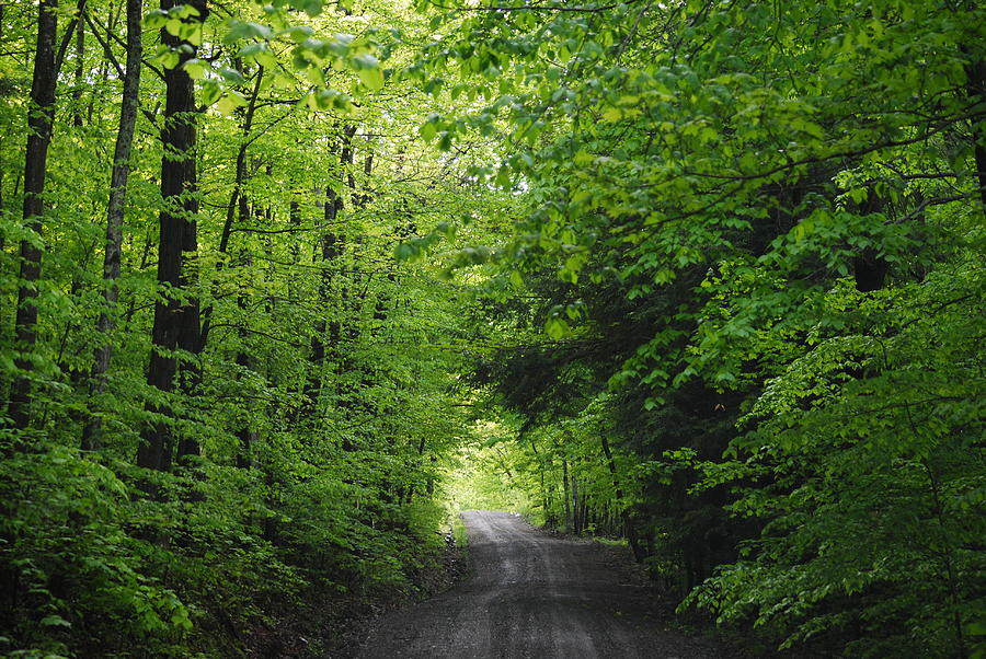 Landscape Photograph - Long Lost Road by April  Robert