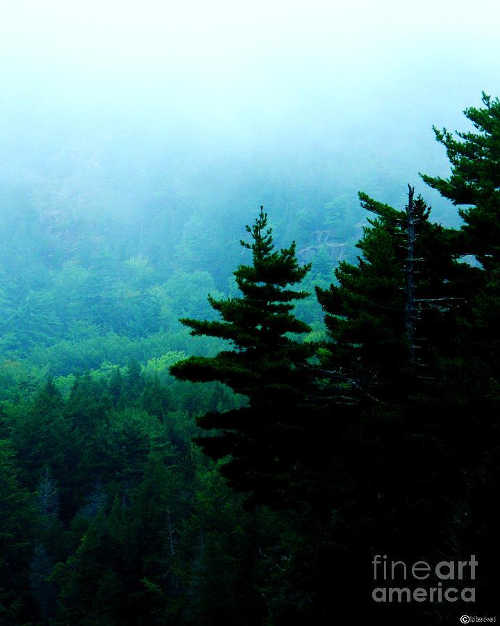 Fog Photograph - Long Pond Silhouettes by Lizi Beard-Ward