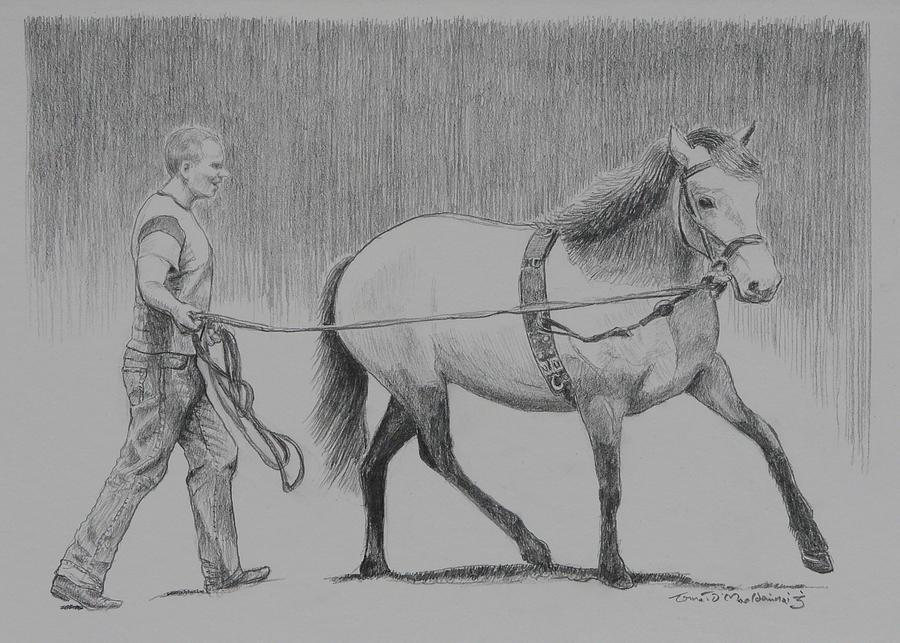 Gallops Drawing - Long Reins Mallard by Tomas OMaoldomhnaigh