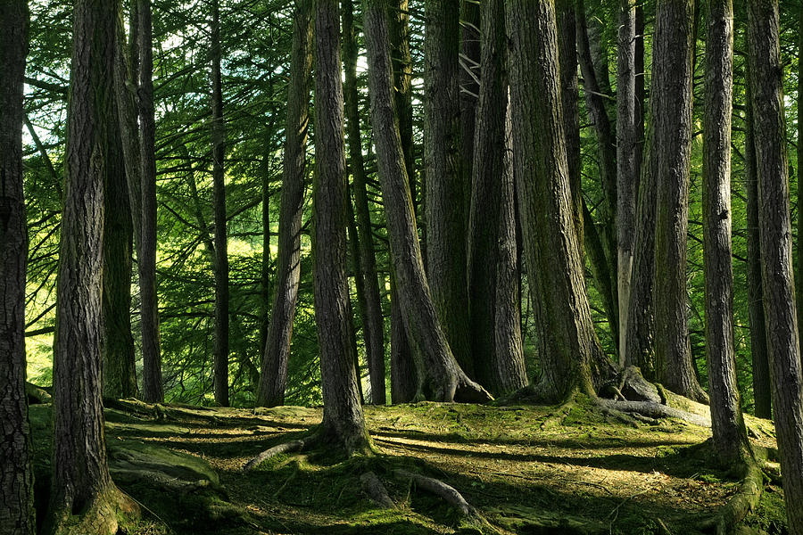 Forest Photograph - Long Shadows by Mike Flynn