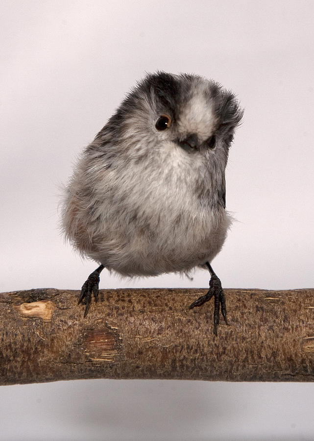 Vertical Photograph - Long-tailed Tit by Les Stocker