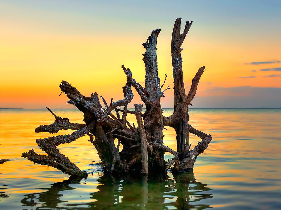 Tree Photograph - Longboat Key Tree by Jenny Ellen Photography