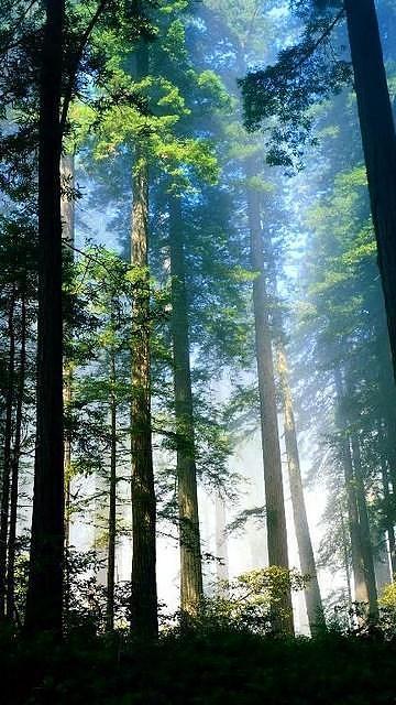 Longest Trees Of World Photograph by Ali Hamza