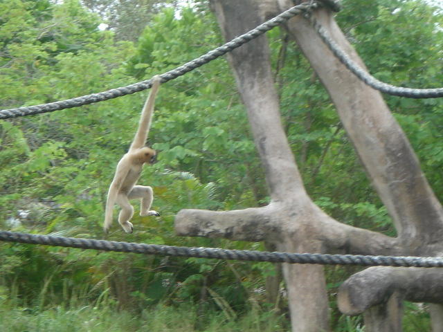 Monkeys Photograph - Look Mom One Hand by Val Oconnor