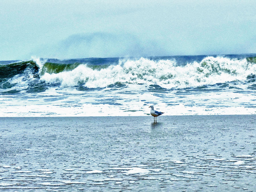 Blue Photograph - Look Out Birdie by Kelly Reber
