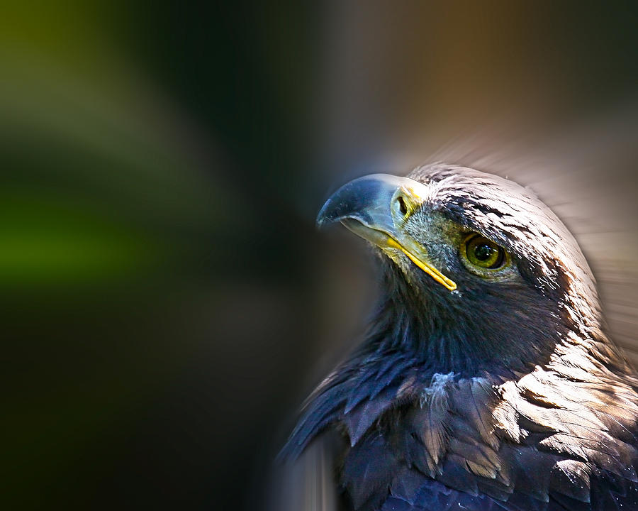 Golden Eagle Photograph - Look To The Light by Steve McKinzie