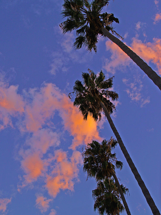 Palm Trees Photograph - Look Up by D Wash