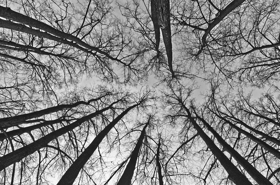 Landscape Photograph - Look up by Michael Goyberg
