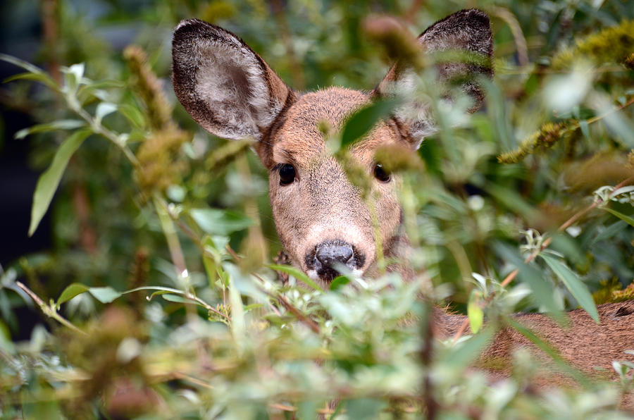 Deer Photograph - Look What I Found In My Garden by Lori Tambakis