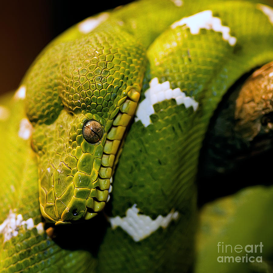 Constrictor Photograph - looking at U by Edward Kreis