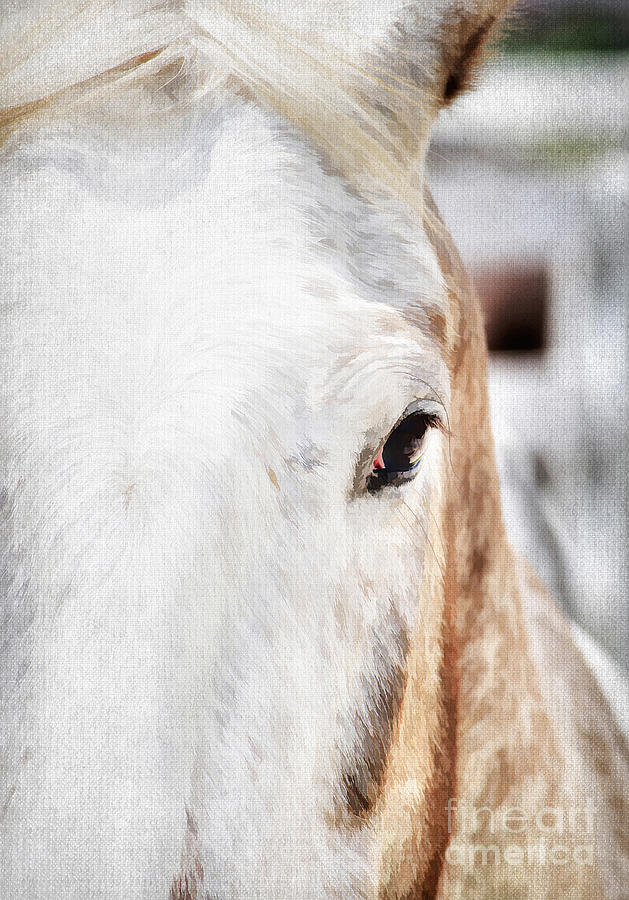 Animal Photograph - Looking Into Her Soul by Darren Fisher