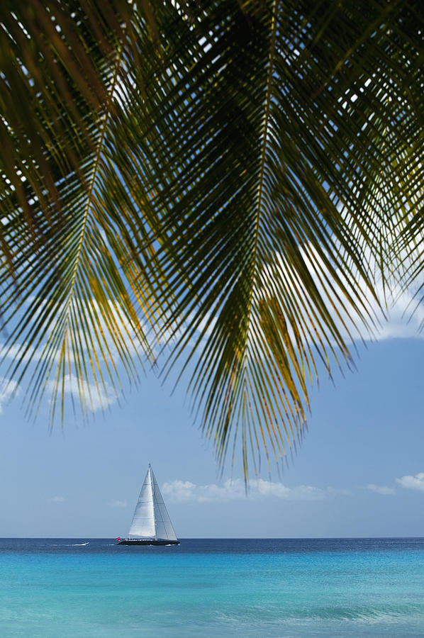 Barbados Photograph - Looking Through Palm Trees To Large by Axiom Photographic