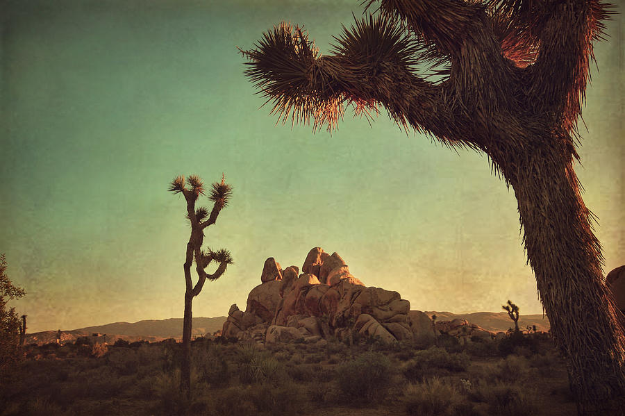 Joshua Tree National Park Photograph - Looming by Laurie Search