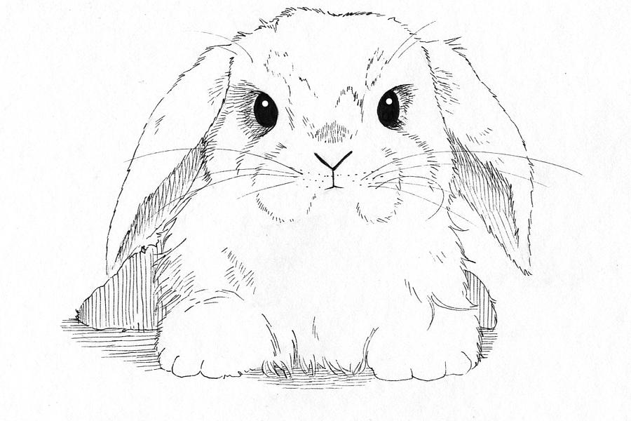 pen drawing drawing lop eared bunny by callan rogers grazado