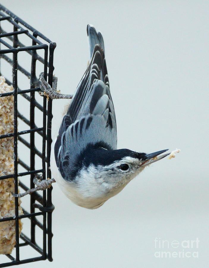 Birds Photograph - Lost Food by Lori Tordsen
