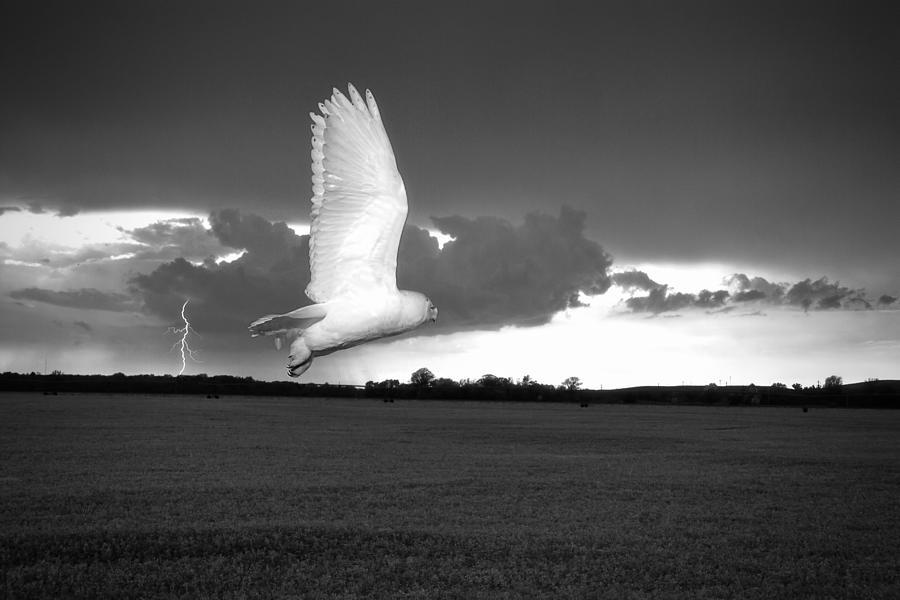 Snow Owl Photograph - Lost Snowy Owl by Joe Gee