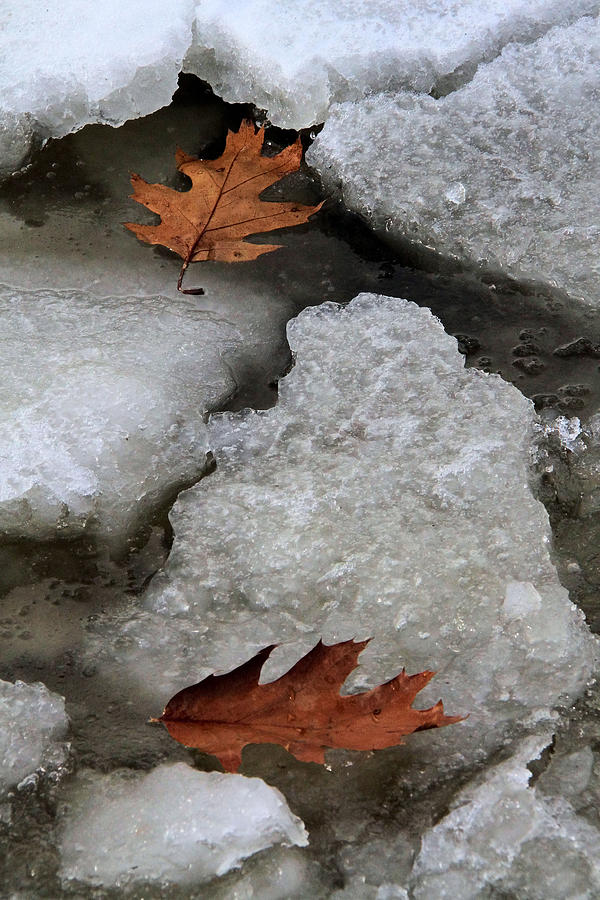 Leaf Photograph - Lost To Each Other by Doris Potter