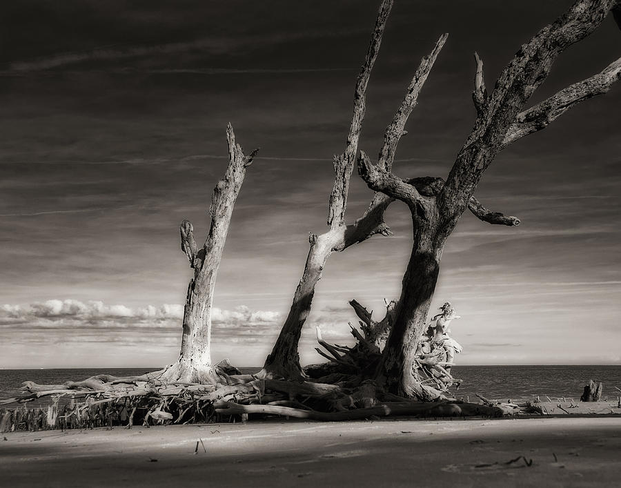 Black And White  Photograph - Lost World by Mario Celzner