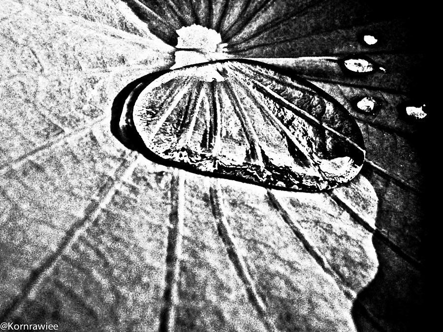 Plants Photograph - Lotus And Her Tears by Kornrawiee Miu Miu