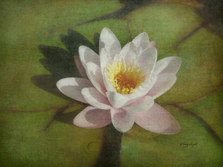 Cindy Photograph - Lotus Blossom Textured by Cindy Wright