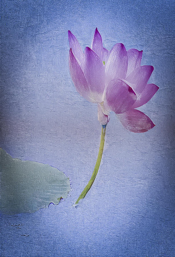 Digital Art Digital Art - Lotus Dream by Jill Balsam
