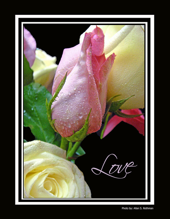 Rose Photograph - Love by Allan Rothman