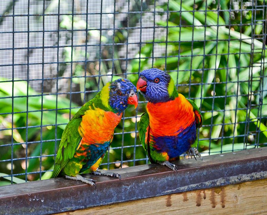 Love Photograph - Love Birds by Julio n Brenda JnB