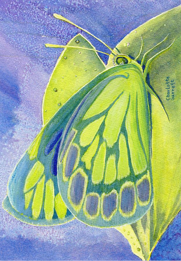 Love Butterfly by Charlotte Garrett