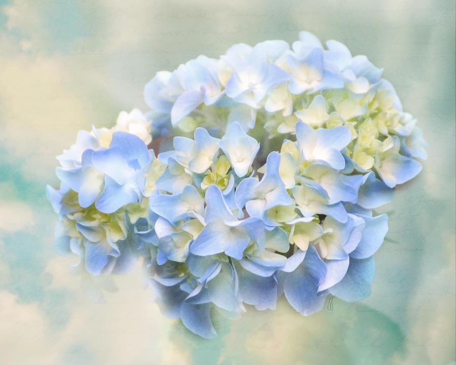 Antique Photograph - Love Letter Vii Hydrangea by Jai Johnson