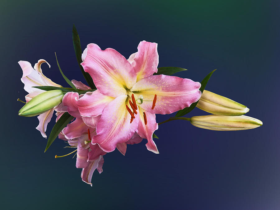 Lily Photograph - Lovely Pink Lilies by Susan Savad