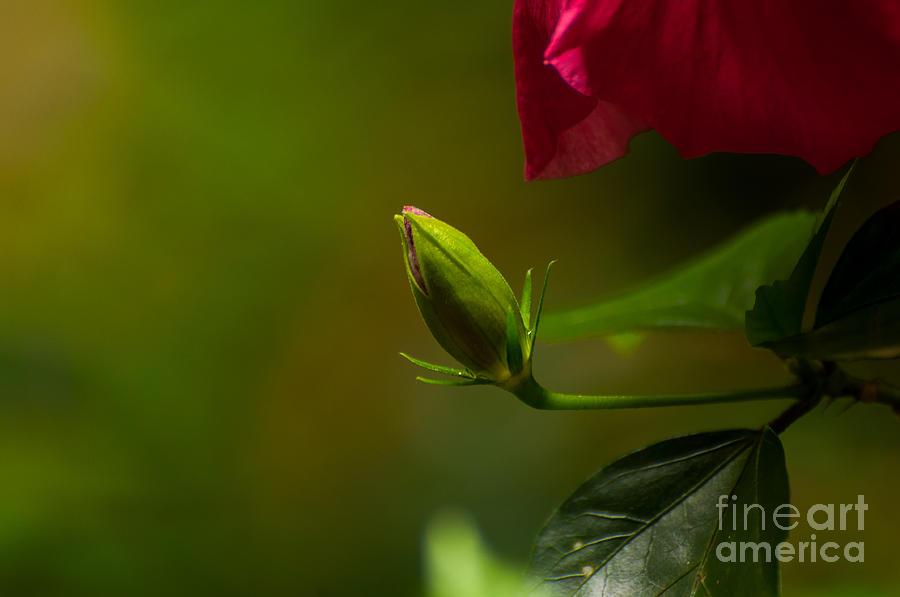 Blooming Photograph - Loves Bloom by Venura Herath