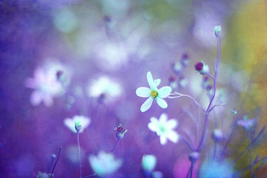 Olive Green Photograph - Lovestruck In Purple by Amy Tyler
